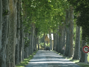 France13_platanes