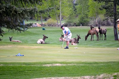 Will 13yr trip - Colorado - Elk on golf course